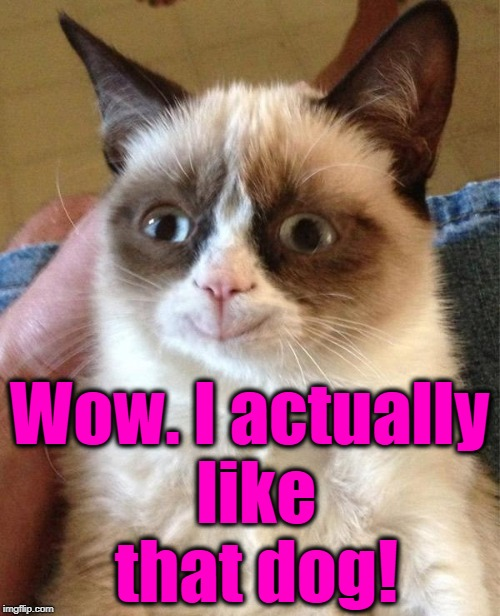 Grumpy Cat Happy Meme | Wow. I actually like that dog! | image tagged in memes,grumpy cat happy,grumpy cat | made w/ Imgflip meme maker
