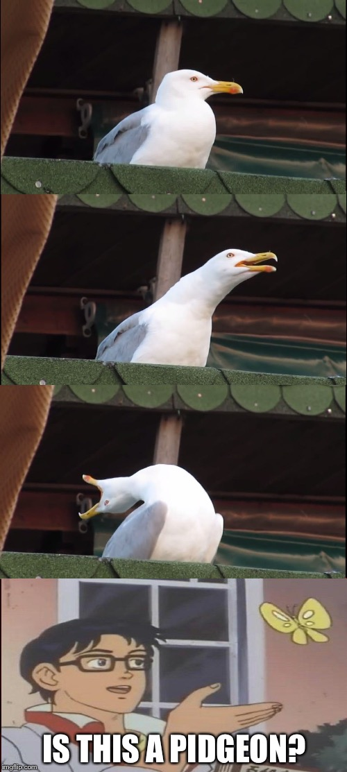 inhaling pidgeon | IS THIS A PIDGEON? | image tagged in memes,inhaling seagull,is this a pigeon | made w/ Imgflip meme maker