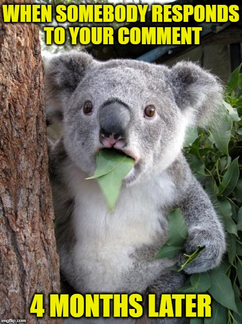 Surprised Koala Meme | WHEN SOMEBODY RESPONDS TO YOUR COMMENT 4 MONTHS LATER | image tagged in memes,surprised koala,imgflip,imgflippers | made w/ Imgflip meme maker