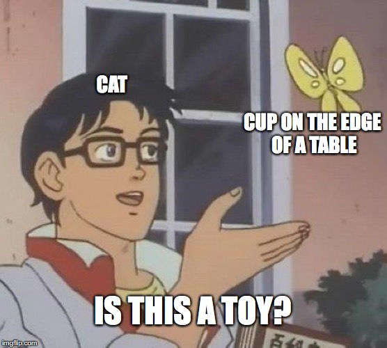 Is This A Pigeon Meme | CAT CUP ON THE EDGE OF A TABLE IS THIS A TOY? | image tagged in memes,is this a pigeon | made w/ Imgflip meme maker
