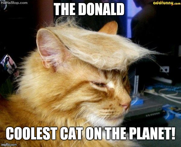 donald trump cat |  THE DONALD; COOLEST CAT ON THE PLANET! | image tagged in donald trump cat | made w/ Imgflip meme maker