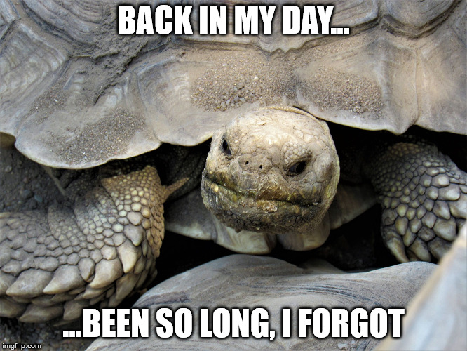 grumpy tortoise | BACK IN MY DAY... ...BEEN SO LONG, I FORGOT | image tagged in grumpy tortoise | made w/ Imgflip meme maker