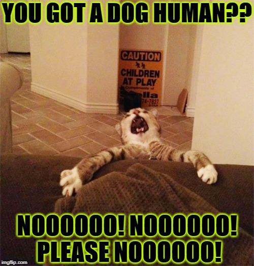 YOU GOT A DOG HUMAN?? NOOOOOO! NOOOOOO! PLEASE NOOOOOO! | image tagged in no no | made w/ Imgflip meme maker