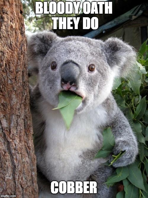 Surprised Koala Meme | BLOODY OATH THEY DO COBBER | image tagged in memes,surprised koala | made w/ Imgflip meme maker
