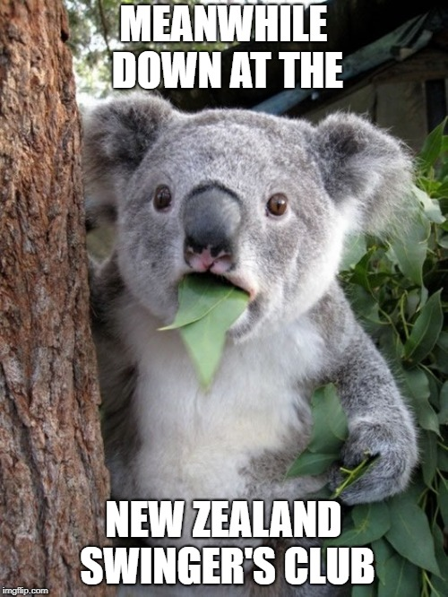 kola | MEANWHILE DOWN AT THE NEW ZEALAND SWINGER'S CLUB | image tagged in kola | made w/ Imgflip meme maker