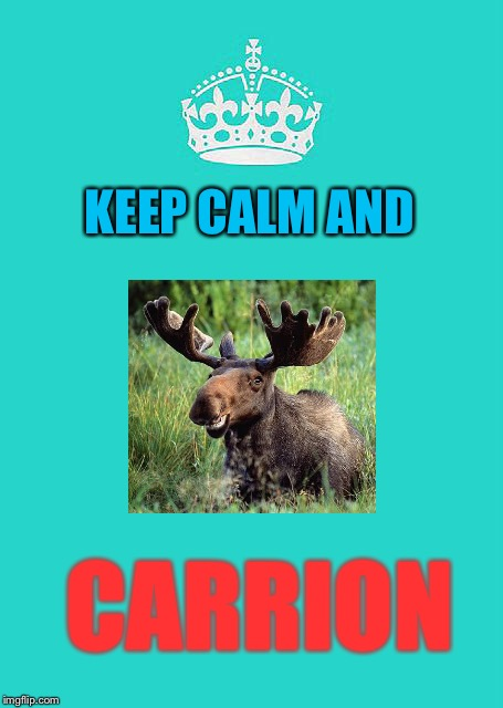 Keep calm and carry on |  KEEP CALM AND; CARRION | image tagged in memes,keep calm and carry on aqua | made w/ Imgflip meme maker