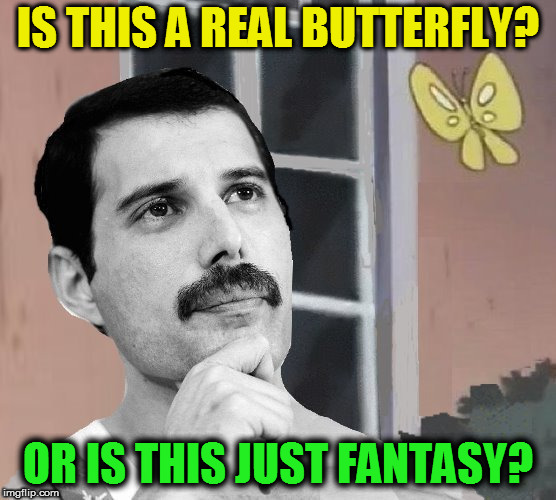 Is This Bohemian Rhapsody | IS THIS A REAL BUTTERFLY? OR IS THIS JUST FANTASY? | image tagged in is this a pigeon,memes,bohemian rhapsody,freddie mercury,queen,giveuahint | made w/ Imgflip meme maker