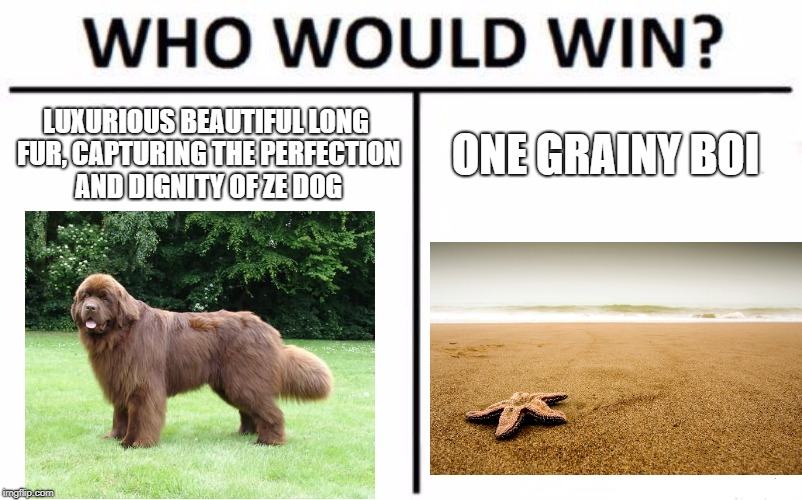 This dog is gonna have a ruff day. | LUXURIOUS BEAUTIFUL LONG FUR, CAPTURING THE PERFECTION AND DIGNITY OF ZE DOG ONE GRAINY BOI | image tagged in memes,who would win,sand,doggo,bad pun,lol | made w/ Imgflip meme maker