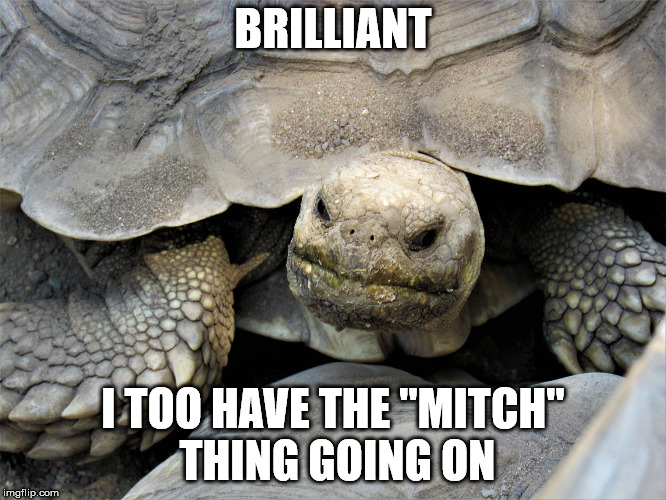 "grumpy tortoise | BRILLIANT I TOO HAVE THE ""MITCH"" THING GOING ON 