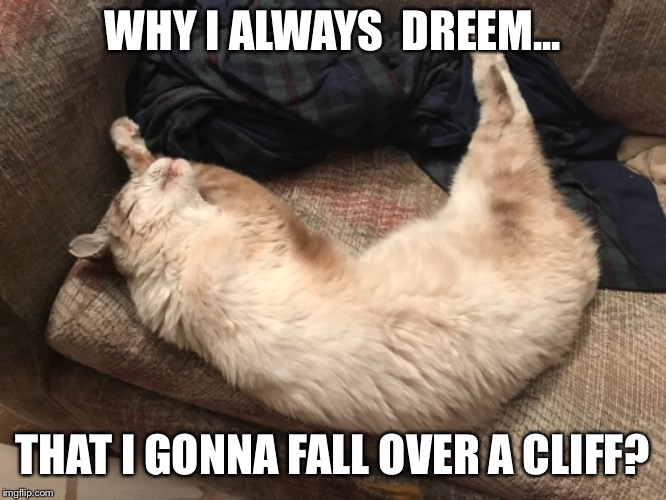 Sleeping Phat LOLCat | WHY I ALWAYS  DREEM... THAT I GONNA FALL OVER A CLIFF? | image tagged in cats,cat,catnip,catnip cat | made w/ Imgflip meme maker