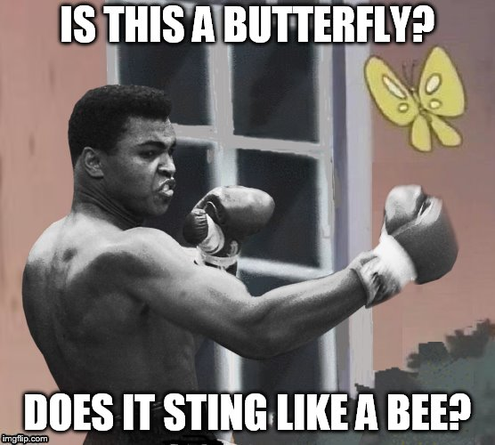 IS THIS A BUTTERFLY? DOES IT STING LIKE A BEE? | made w/ Imgflip meme maker