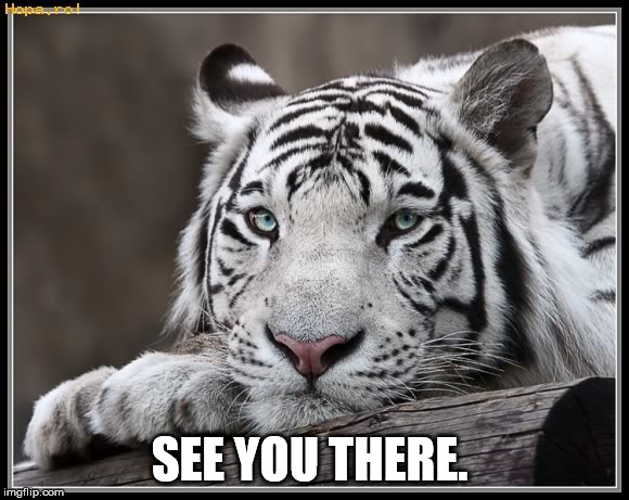 White Tiger | SEE YOU THERE. | image tagged in white tiger | made w/ Imgflip meme maker