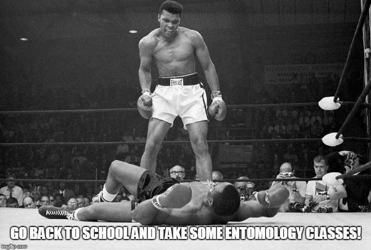 GO BACK TO SCHOOL AND TAKE SOME ENTOMOLOGY CLASSES! | made w/ Imgflip meme maker