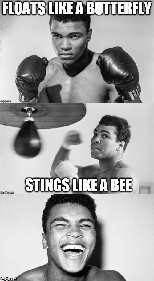 Ali's pun with punch | FLOATS LIKE A BUTTERFLY STINGS LIKE A BEE | image tagged in ali's pun with punch | made w/ Imgflip meme maker