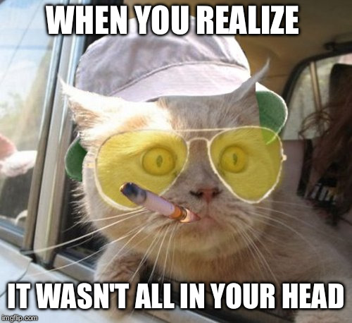 Fear And Loathing Cat Meme | WHEN YOU REALIZE IT WASN'T ALL IN YOUR HEAD | image tagged in memes,fear and loathing cat,cat,funny,deep thoughts,first world problems | made w/ Imgflip meme maker