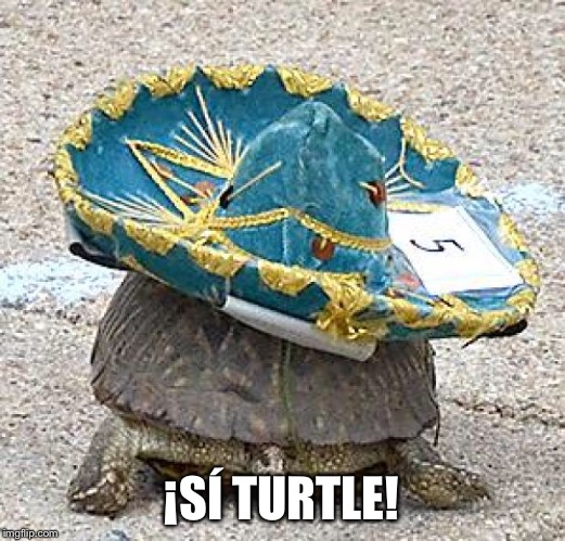 ¡SÍ TURTLE! | image tagged in turtle,spanish,turtle meme,turtles,puns,language | made w/ Imgflip meme maker