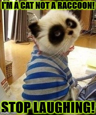 WHAT? | I'M A CAT NOT A RACCOON! STOP LAUGHING! | image tagged in what | made w/ Imgflip meme maker