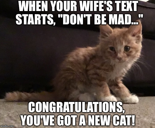 "Hey, Guess What! | WHEN YOUR WIFE'S TEXT STARTS, ""DON'T BE MAD…"" CONGRATULATIONS, YOU'VE GOT A NEW CAT! 