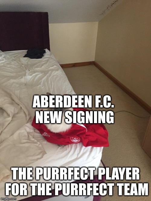 Aberdeen's new footballer | ABERDEEN F.C. NEW SIGNING THE PURRFECT PLAYER FOR THE PURRFECT TEAM | image tagged in memes,football | made w/ Imgflip meme maker