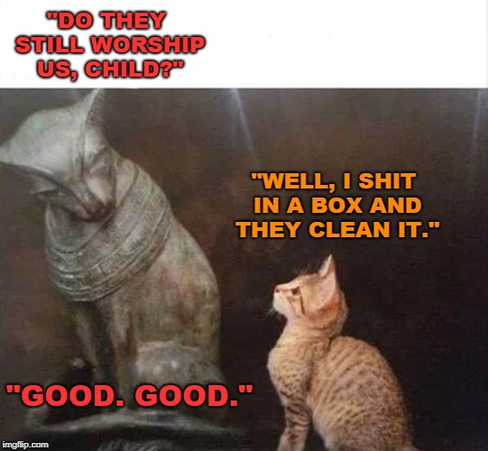 "The Cat Is Master | ""DO THEY STILL WORSHIP US, CHILD?"" ""WELL, I SHIT IN A BOX AND THEY CLEAN IT."" ""GOOD. GOOD."" 