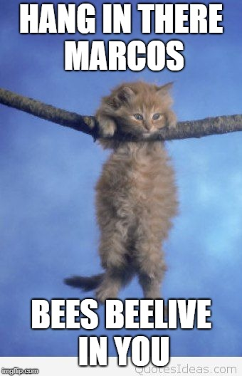 Hang in there |  HANG IN THERE MARCOS; BEES BEELIVE IN YOU | image tagged in hang in there | made w/ Imgflip meme maker