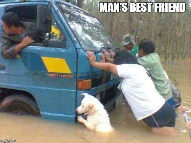 He's a Good Boy | MAN'S BEST FRIEND | image tagged in memes | made w/ Imgflip meme maker