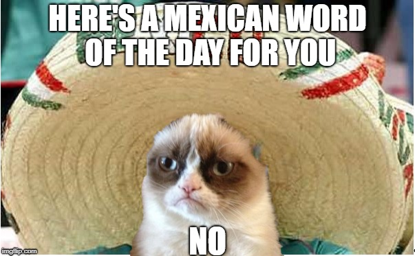 Grumpy Mexican Cat | HERE'S A MEXICAN WORD OF THE DAY FOR YOU NO | image tagged in mexico,mexican,grumpy cat,mexican word of the day | made w/ Imgflip meme maker