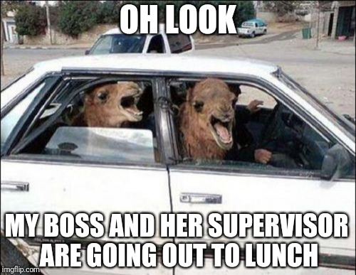 Quit Hatin |  OH LOOK; MY BOSS AND HER SUPERVISOR ARE GOING OUT TO LUNCH | image tagged in memes,quit hatin | made w/ Imgflip meme maker