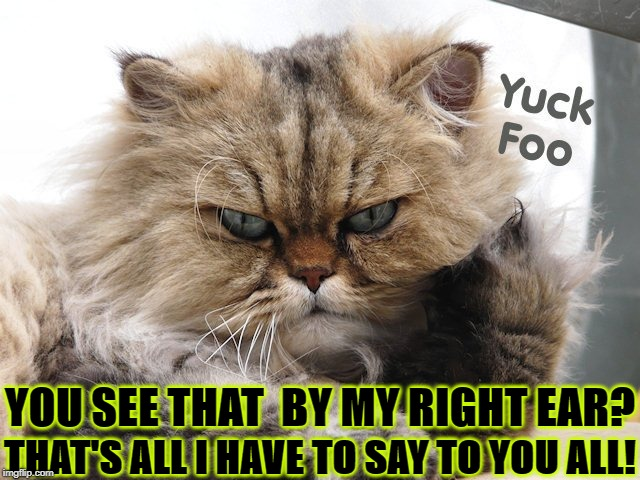 THAT'S ALL I HAVE TO SAY TO YOU ALL! YOU SEE THAT  BY MY RIGHT EAR? | image tagged in cat's opinion | made w/ Imgflip meme maker