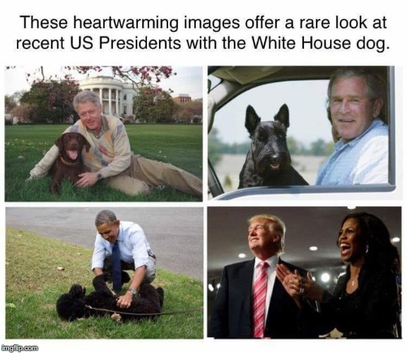 The Prez and their dogs | image tagged in dogs,president trump | made w/ Imgflip meme maker