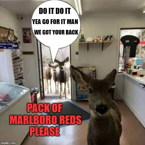friends | DO IT DO IT YEA GO FOR IT MAN WE GOT YOUR BACK PACK OF MARLBORO REDS PLEASE | image tagged in kids,cigs,store,funny | made w/ Imgflip meme maker