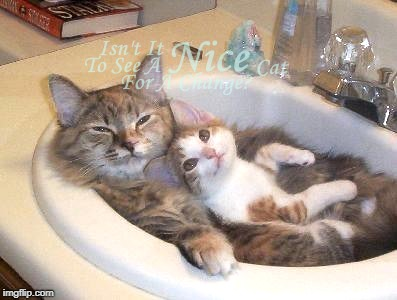 Isn't It Nice? | image tagged in memes,cats,different,cat,cute,cute cat | made w/ Imgflip meme maker