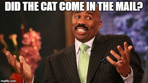 Steve Harvey Meme | DID THE CAT COME IN THE MAIL? | image tagged in memes,steve harvey | made w/ Imgflip meme maker