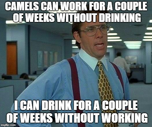 That Would Be Great | CAMELS CAN WORK FOR A COUPLE OF WEEKS WITHOUT DRINKING I CAN DRINK FOR A COUPLE OF WEEKS WITHOUT WORKING | image tagged in memes,that would be great | made w/ Imgflip meme maker