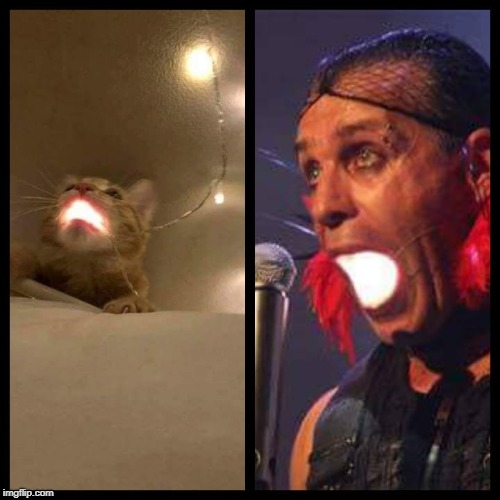 Who wore it better? | image tagged in rammstein,fashion,catto | made w/ Imgflip meme maker