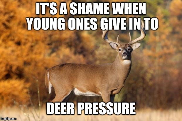 whitetail deer | IT'S A SHAME WHEN YOUNG ONES GIVE IN TO DEER PRESSURE | image tagged in whitetail deer | made w/ Imgflip meme maker