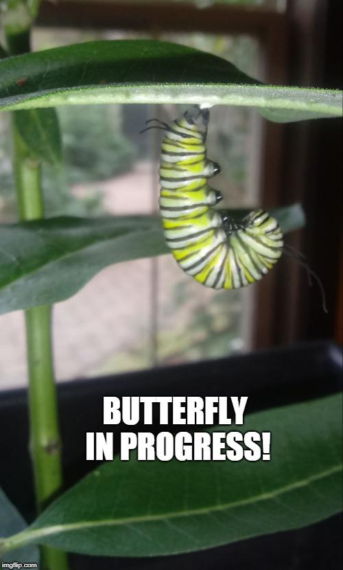 Image tagged in butterflyinprogress - Imgflip