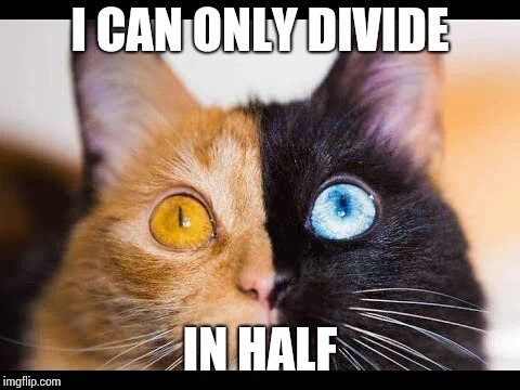 I CAN ONLY DIVIDE IN HALF | made w/ Imgflip meme maker