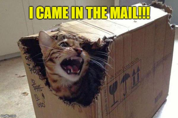 I CAME IN THE MAIL!!! | made w/ Imgflip meme maker