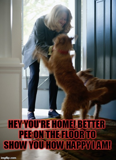 dog | HEY YOU'RE HOME! BETTER PEE ON THE FLOOR TO SHOW YOU HOW HAPPY I AM! | image tagged in dog | made w/ Imgflip meme maker