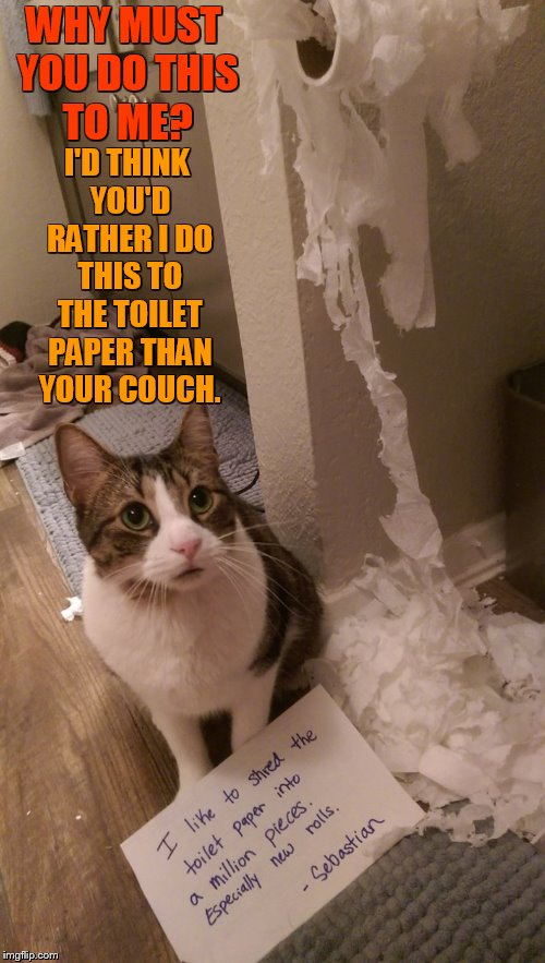But...What Do You Mean? | WHY MUST YOU DO THIS TO ME? I'D THINK YOU'D RATHER I DO THIS TO THE TOILET PAPER THAN YOUR COUCH. | image tagged in memes,cat,shame,what do you mean,scratch,couch | made w/ Imgflip meme maker
