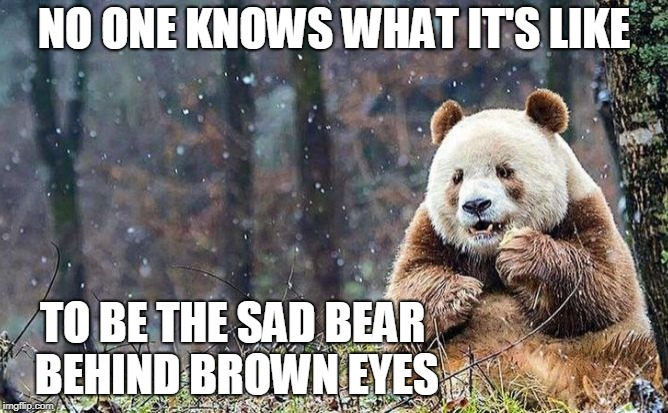 NO ONE KNOWS WHAT IT'S LIKE TO BE THE SAD BEAR BEHIND BROWN EYES | image tagged in sad brown panda,panda,pandas,memes,animals,sad | made w/ Imgflip meme maker