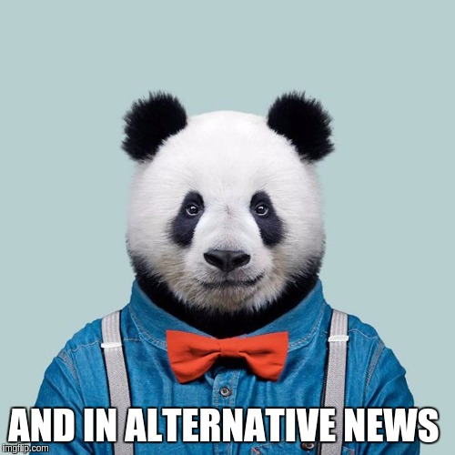 Hello All | AND IN ALTERNATIVE NEWS | image tagged in alternate reality,real news network,good news everyone,cnn wolf of fake news fanfiction,fake news | made w/ Imgflip meme maker