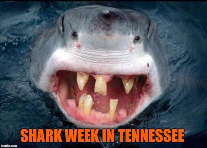 Shark Week in | SHARK WEEK IN TENNESSEE | image tagged in shark week in,tennessee,shark week,shark,redneck hillbilly,hillbilly | made w/ Imgflip meme maker