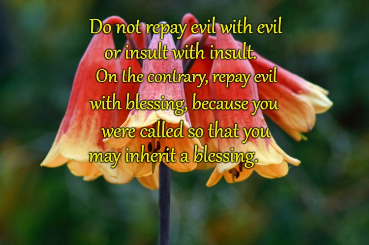1 Peter 3;9 Don't Repay Evil With Evil Repay Evil With Blessing | Do not repay evil with evil or insult with insult. On the contrary, repay evil with blessing, because you were called so that you may inheri | image tagged in bible,holy bible,holy spirit,bible verse,verse,god | made w/ Imgflip meme maker