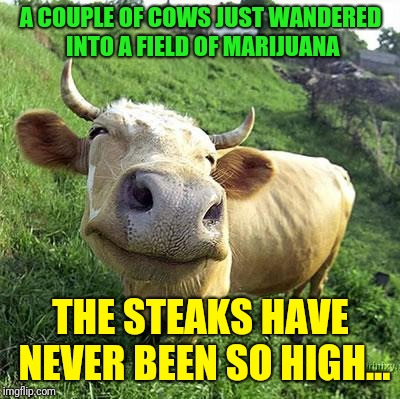 Pretty high steaks | A COUPLE OF COWS JUST WANDERED INTO A FIELD OF MARIJUANA THE STEAKS HAVE NEVER BEEN SO HIGH… | image tagged in cow,memes,marijuana,steak | made w/ Imgflip meme maker