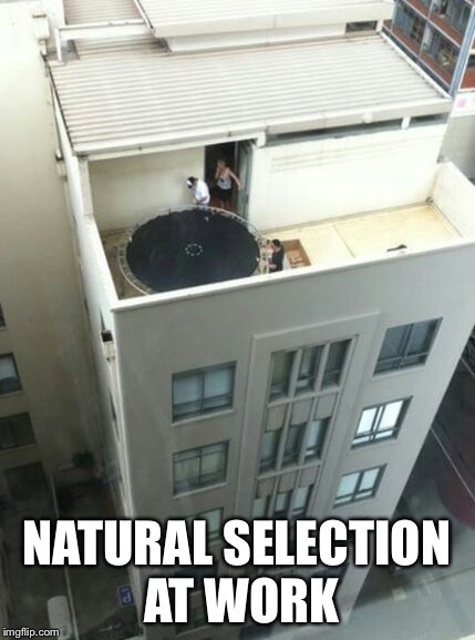 Natural selection  | NATURAL SELECTION AT WORK | image tagged in darwin award | made w/ Imgflip meme maker