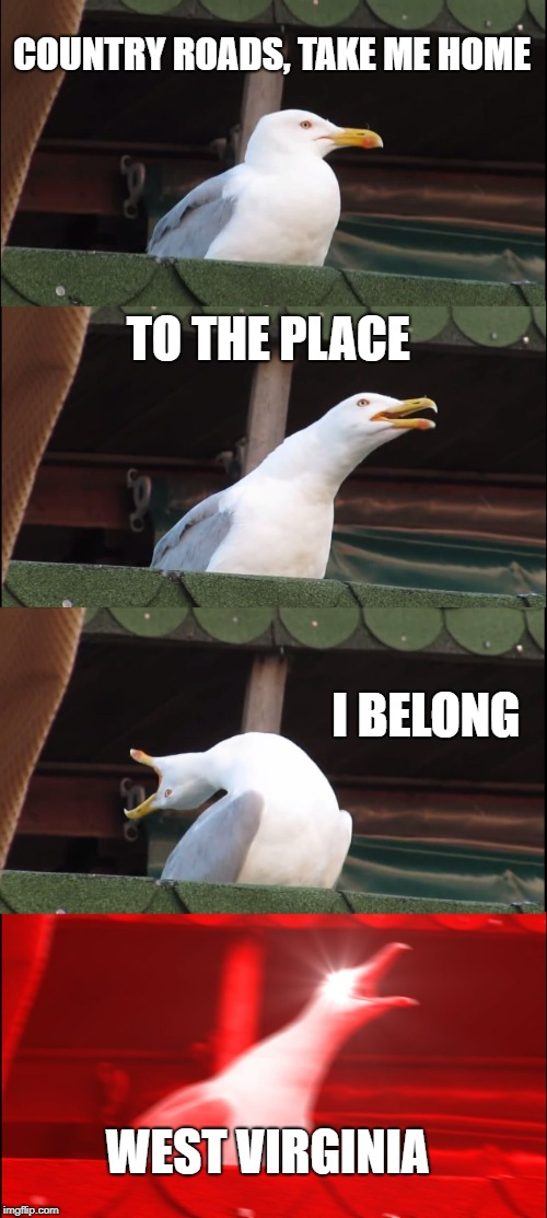 Inhaling Seagull Meme | COUNTRY ROADS, TAKE ME HOME TO THE PLACE I BELONG WEST VIRGINIA | image tagged in memes,inhaling seagull | made w/ Imgflip meme maker