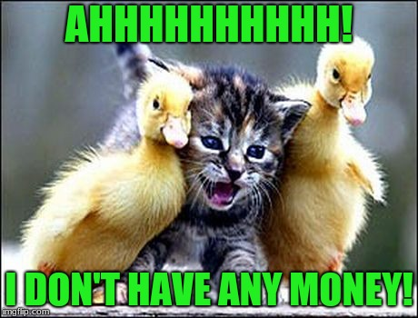 The duck mugging | AHHHHHHHHHH! I DON'T HAVE ANY MONEY! | image tagged in cute cat | made w/ Imgflip meme maker