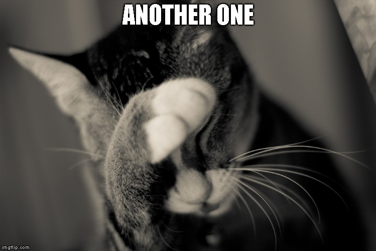 Facepalm cat | ANOTHER ONE | image tagged in facepalm cat | made w/ Imgflip meme maker
